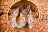 Six in a basket — Stock Photo