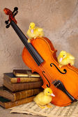 Ducklings on classical violin — Stock Photo