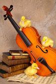 Klasik keman üzerinde ördek yavrusu — Stok fotoğraf