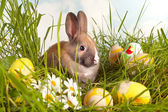 Eggs and easter bunny — Stock Photo