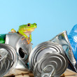 Frog on garbage — Stock Photo