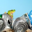 Frog on garbage — Foto Stock