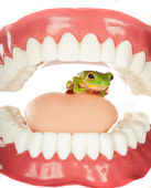 Frog in throat — Stock Photo