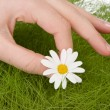 Picking one daisy — Stock Photo #8704829