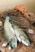 Deniz ürünleri natürmort — Stok fotoğraf