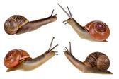 Quatro caracóis — Fotografia Stock