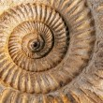 Ammonite closeup — Stock Photo #8858156