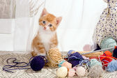 Caught with wool — Stock Photo