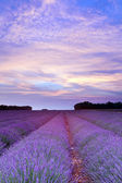 Provence lavender sunset — Stock Photo