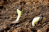 Seeds in springtime — Stock Photo