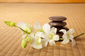 Zen stones and orchids — Stock Photo