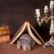Sleepy under a book — Stock Photo #8966321