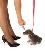 Bacakları ve köpek yavrusu — Stok fotoğraf