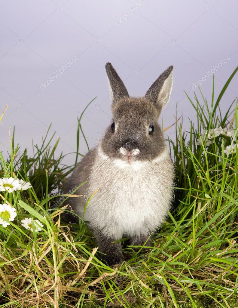 灰色的小兔子 — 图库照片#8965575