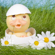 Daisy duckling — Stock Photo