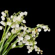 Muguet bouquet — Stock Photo