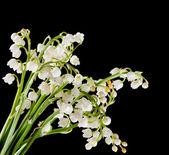 Muguet bouquet — Stock Photo
