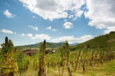 French Alsace wine village — Stock Photo