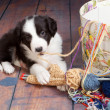 Tangled puppy — Stock Photo