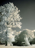 Park trees in infrared — Stock Photo