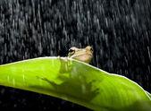 Kikker in de regen — Stockfoto