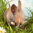 Stock Photo: Shy rabbit