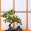 Buddha and bonsai — Stock Photo
