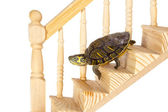 Turtle going down — Stock Photo
