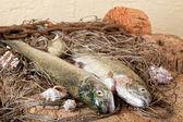 Ochtend vangst — Stockfoto