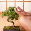 Meditation and bonsai — Stock Photo