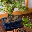 Stock Photo: Herbs and bonsai