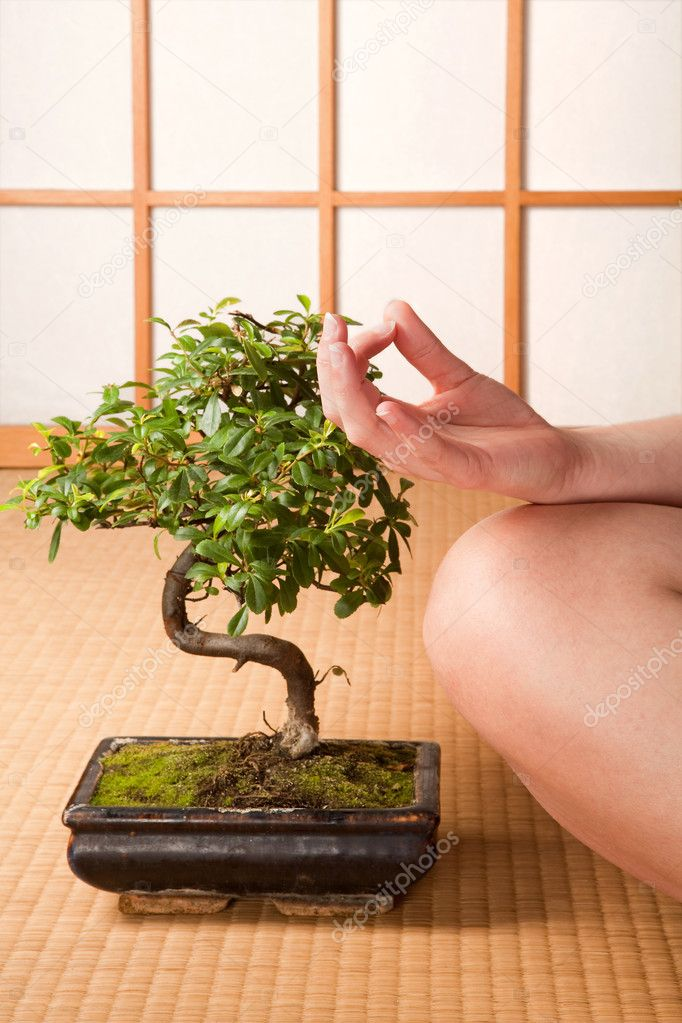 Meditating woman sitting next to a bonsai tree on a Japanese tatami mat — Stock Photo #9720131