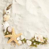 Border of seashells — Stock Photo