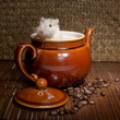 Coffee rat — Stock Photo #9841366