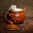Stock Photo: Coffee rat
