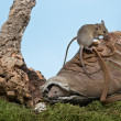 Shoe for mice — Stock Photo