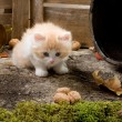 Shy kitten — Stock Photo #9841493