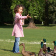 Feeding ducks — Stock Photo