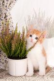 Plant lover — Stock Photo