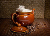 Coffee rat — Stock Photo