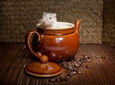 Coffee rat — Stock Photo