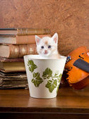 Kitten in a pot — Stock Photo