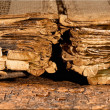 Stock Photo: Tattered pages of antique book