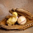 Baseball duckling — Stock Photo