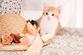 Kitty with hat — Stock Photo