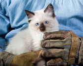 Strong man little kitten — Stock Photo