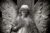 Ventilées ange — Photo