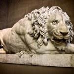 Growling Lion — Stock Photo