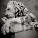 Sleeping Lion — Stock Photo #9716413