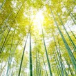 Bamboo — Stock Photo #10627700